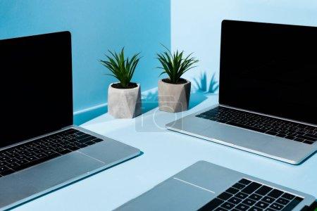 Photo pour Ordinateurs portables modernes près de plantes vertes sur fond bleu - image libre de droit