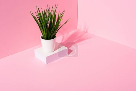 Photo for Green plant on white stand on pink background - Royalty Free Image