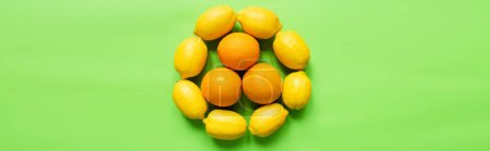 Photo for Top view of ripe lemons and oranges arranged in circle on green background, panoramic orientation - Royalty Free Image