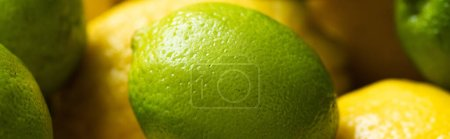 Photo for Close up view of fresh ripe lemons and lime, panoramic orientation - Royalty Free Image