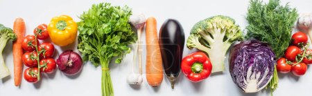 Photo for Top view of colorful assorted fresh vegetables in row on white background, panoramic shot - Royalty Free Image