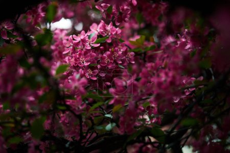 close-up shot of beautiful pink cherry blossom on tree