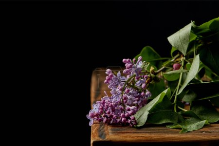 close-up shot of spring lilac flowers on wooden surface isolated on black
