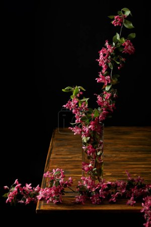 close-up shot of branch of pink cherry blossom in vase isolated on black