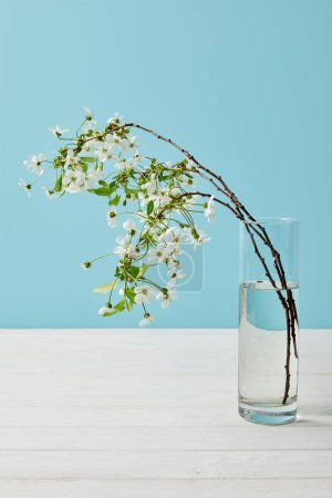 close-up shot of branches of beautiful cherry flowers in glass isolated on blue