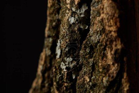 Close up shot of tree bark isolated on black background