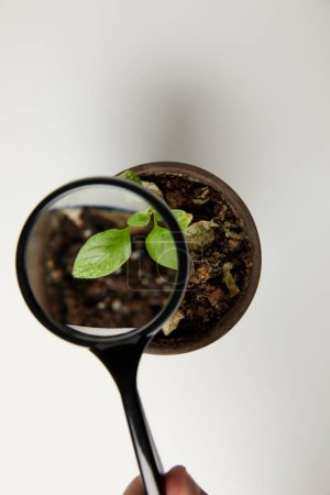top view through magnifying glass at green plant in pot on grey