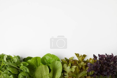 top view of various leaf vegetables on white surface