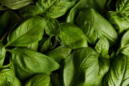 Photo for Full frame shot of ripe green basil for background - Royalty Free Image