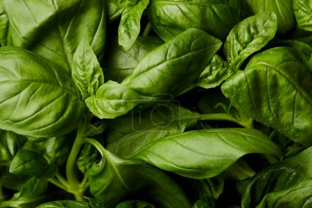 Photo for Full frame shot of fresh green basil for background - Royalty Free Image
