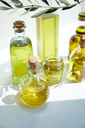 closeup shot of different bottles of aromatic olive oil, branch and jar on white table