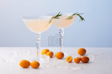 two glasses of alcohol cocktail with rosemary surrounded by kumquats and ice cubes on blue background
