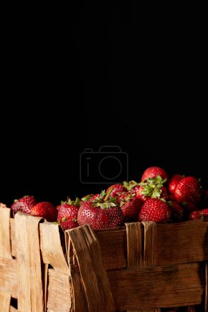 fresh red strawberries in rustic box isolated on black