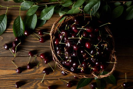 top view of ripe cherries in old basket on wooden table with leaves