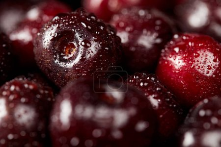 close-up shot of fresh red sweet cherries covered with water drops