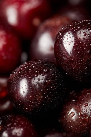 close-up shot of fresh ripe cherries covered with water drops