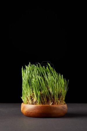 spirulina grass in wooden bowl on black background