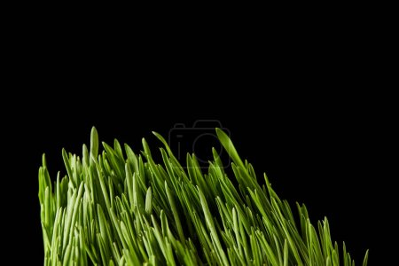 close up view of spirulina grass isolated on black background