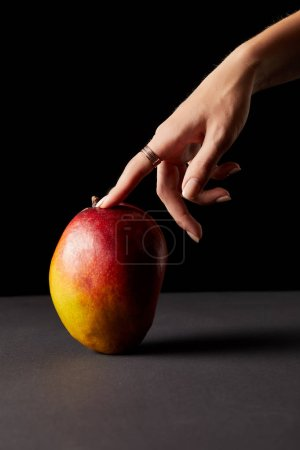 cropped image of woman touching mango on black background