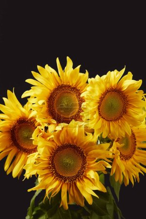 beautiful yellow sunflower bouquet, isolated on black