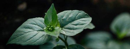 Photo pour Foyer sélectif des feuilles vertes sur fond flou - image libre de droit