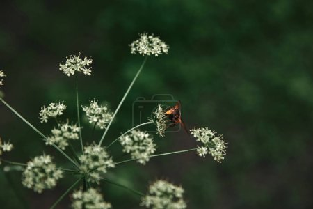 selective focus of bee on flowers with blurred background
