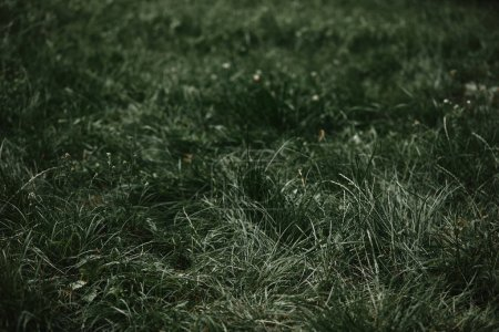 selective focus of grass with blurred background