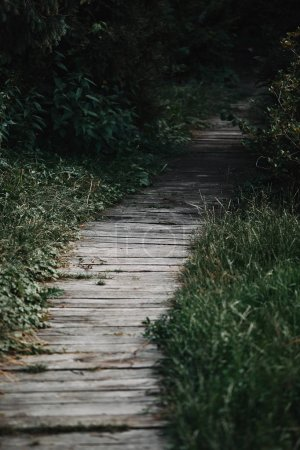 selective focus of wooden path between green grass in park