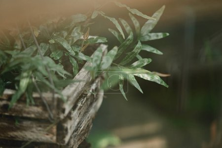selective focus of green plant leaves in wooden box outdoors