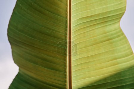 close up view of tropical green leaf with sunlight outdoors