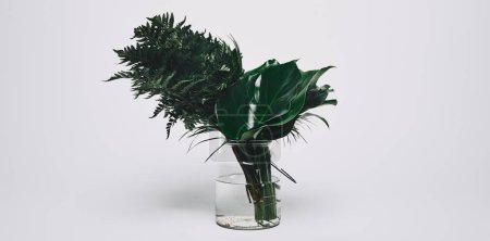 bunch of different green leaves in glass vase on white