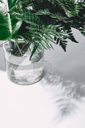 Photo for Close-up shot of bunch of various green leaves in glass vase on white - Royalty Free Image