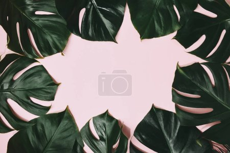 top view of monstera leaves frame on pink surface