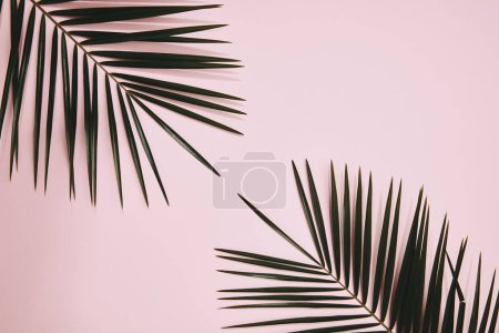 top view of palm branches arranged on pink surface