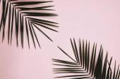 """Постер, картина, фотообои """"вид сверху пальмовые ветви расположены на розовый поверхности"""""""