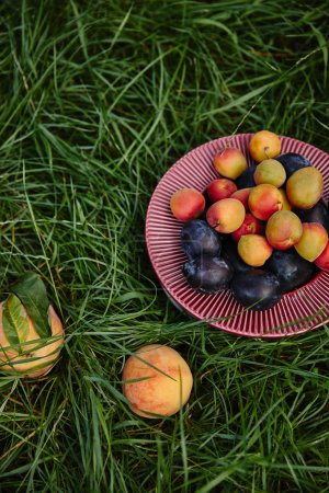 elevated view of plums, apricots and peaches on green grass in garden