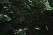 """Постер, картина, фотообои """"вид сверху красивых зеленых мокрые листья, тропический фон"""""""