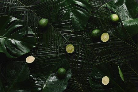top view of fresh limes and beautiful green wet tropical leaves