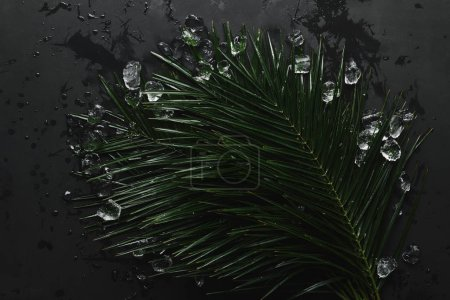 top view of beautiful green wet palm leaves and ice cubes on black
