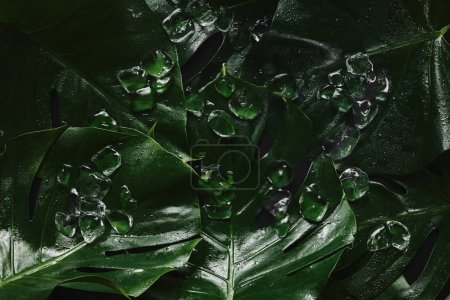 top view of beautiful green wet tropical leaves and ice cubes