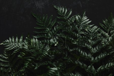 top view of beautiful green wet fern on black