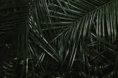 """Постер, картина, фотообои """"крупным планом вид красивых зеленых мокрых пальмовых листьев и папоротник"""""""