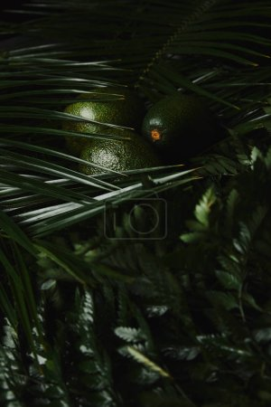 close-up view of fresh green tropical leaves and avocados