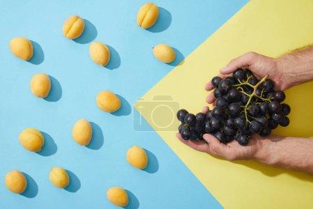 Photo pour Photo recadrée de raisins mûrs dans des mains humaines et abricots mûrs frais - image libre de droit
