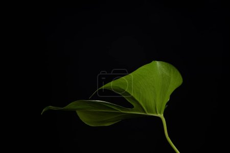 close-up view of beautiful fresh green leaf isolated on black background