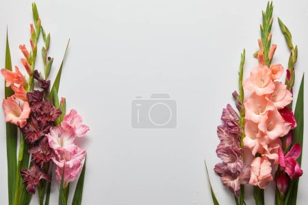 close-up view of beautiful pink and violet gladioli flowers on grey background