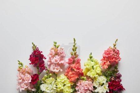 beautiful fresh blooming decorative gladioli flowers on grey background