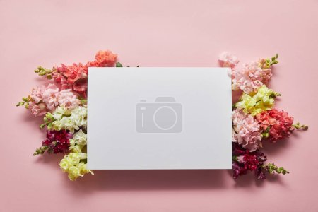 top view of beautiful tender flowers and blank card on pink