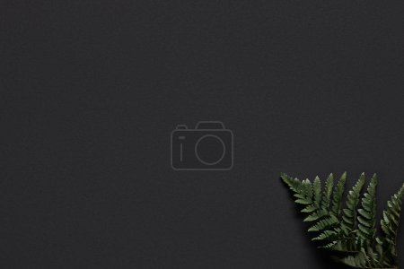 Green fern leaf on black background
