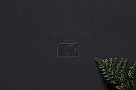 Photo pour Feuille de fougère verte sur fond noir - image libre de droit